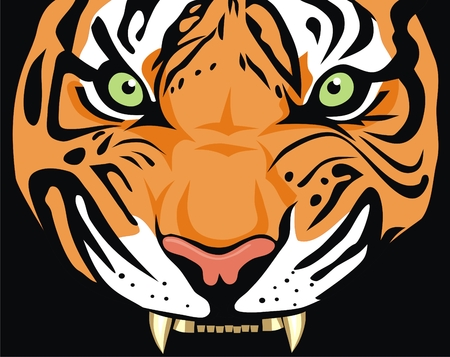 carnivora: Abstract vector illustration of tigers head Illustration