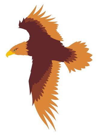 aguila volando: Ilustraci�n vectorial de vuelo de �guila Vectores