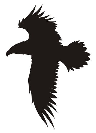 predators: Abstract vector illustration of flying eagle Illustration