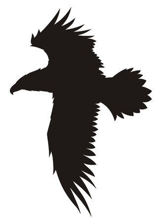 aguila volando: Resumen ilustraci�n vectorial de vuelo de �guila