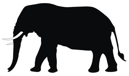 silhouettes elephants: Resumen ilustraci�n vectorial de elefante