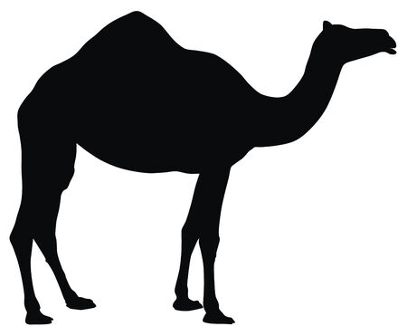 Abstract vector illustration of camel