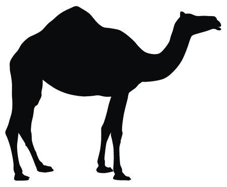 Resumen ilustración vectorial de camellos