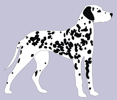 dalmatian: Abstract vector illustration of Dalmatian dog Illustration