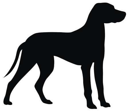 dog silhouette: Abstract vector illustration of hunting dog silhouette