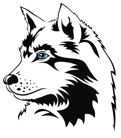 wolf head: Abstract vector illustration of wolf