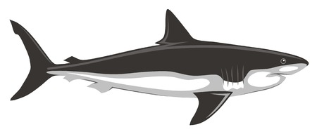 Abstract vector illustration of shark
