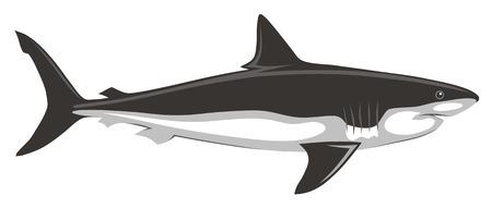 sharks: Abstract vector illustration of shark
