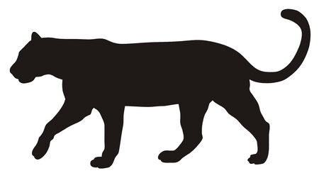 carnivorous animals: Abstract vector illustration of puma
