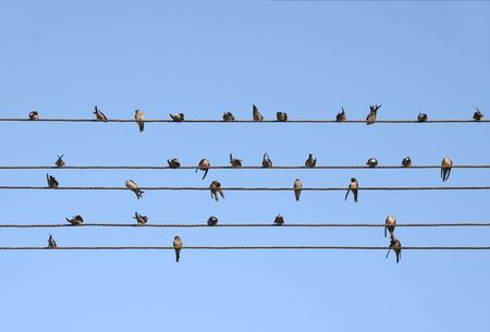 alight: Swallow alighted on electric wires