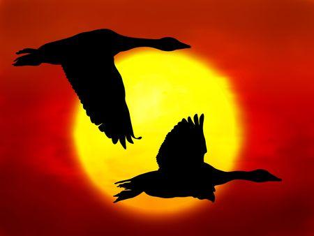 夕日を背景に雁行のイラスト
