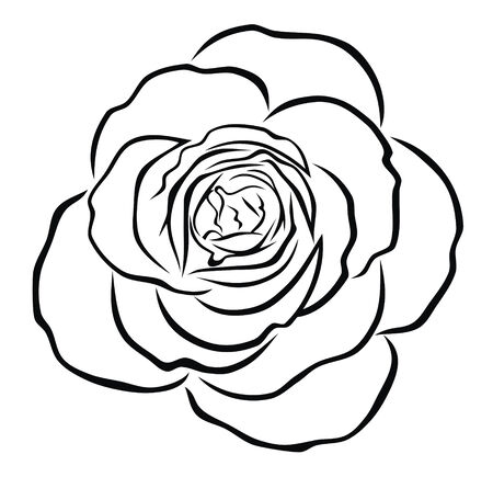 Abstract vector illustration of rose Vector