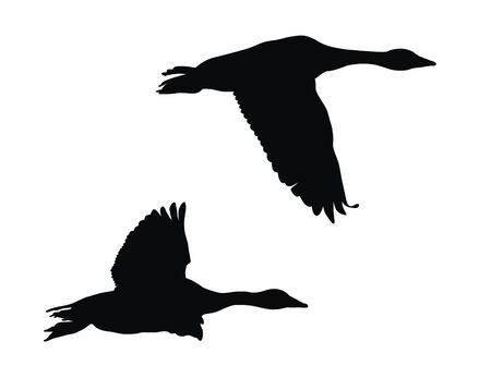 Abstract vector illustration of flying geese Stock Vector - 6251342
