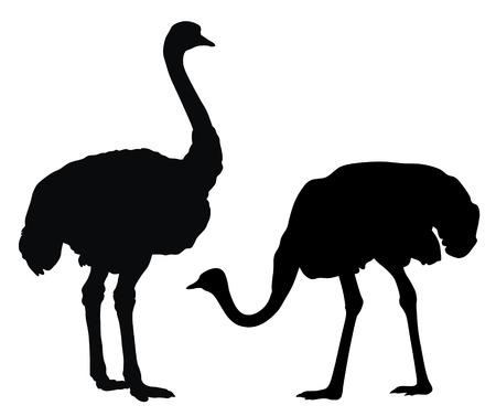 Abstract vector illustratie van struis vogel  Vector Illustratie