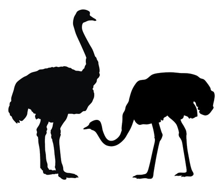 biped: Abstract vector illustration of ostrich