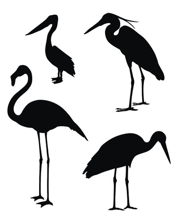 water bird: Abstract vector illustration of waders