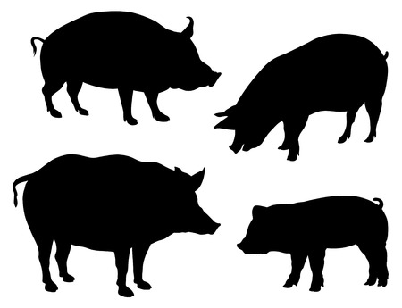 porker: Abstract vector illustration of various pigs silhouettes