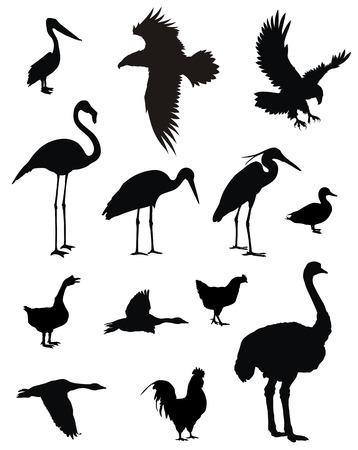 avestruz: varias de las aves siluetas Vectores