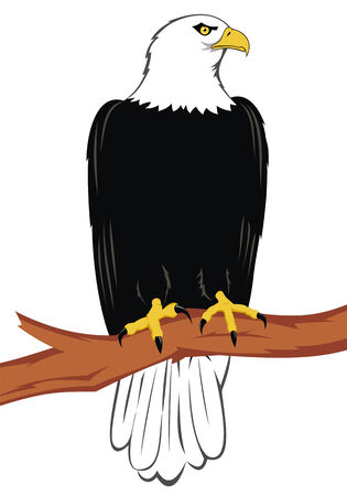 bird of prey: eagle