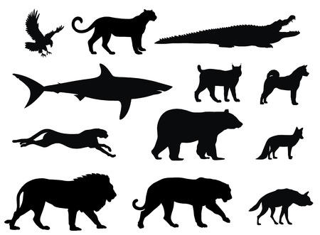 silueta tigre: diversos siluetas de animal depredador