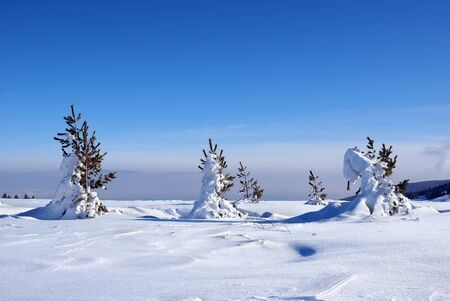 hoar: Winter scene in mountain Vitosha, Bulgaria                         Stock Photo