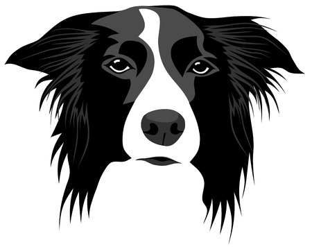Abstract vector illustration of border collie head Çizim
