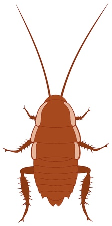 adverse: illustration of brown cockroach