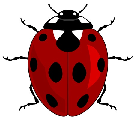 ladybird: illustration of a ladybird