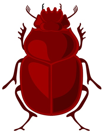 scarab: illustration of beetle scarab