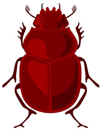 scarabaeidae: illustration of beetle scarab