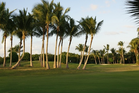 republic dominican: Golf playground at sunset in Dominican Republic