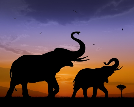 afrika: Couple of elephants on sunset bacckground
