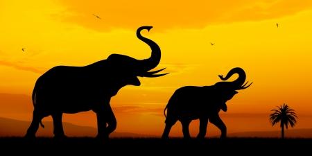 일몰 bacckground에 코끼리의 커플