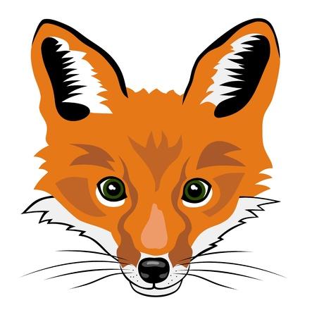 fox face: Ilustraci�n de estilo de dibujos animados la cabeza de zorro