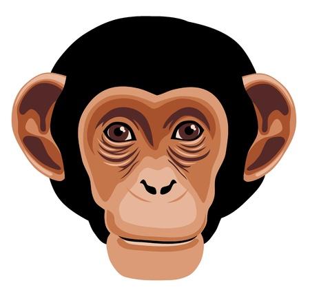 원숭이 머리 만화 스타일의 그림 일러스트