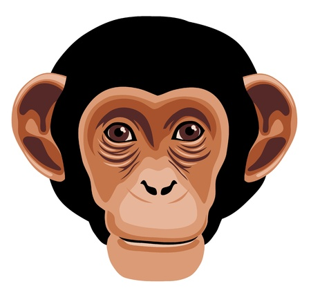 illustration of monkey head cartoon style Çizim