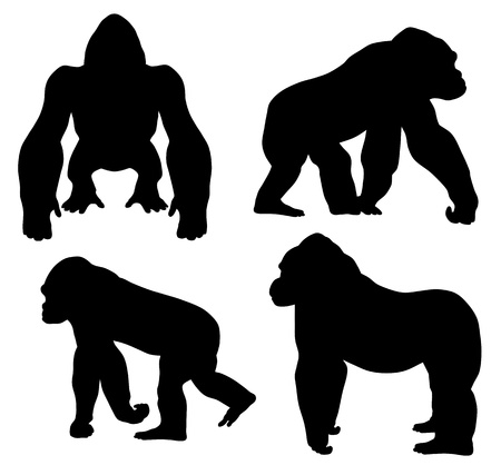 gorila: Ilustración abstracta del gorila silouetthe Vectores