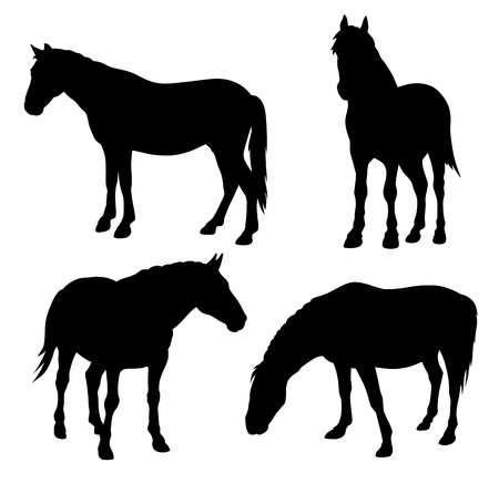 hoofed mammal: Abstract vector illustration of horse silhouettes