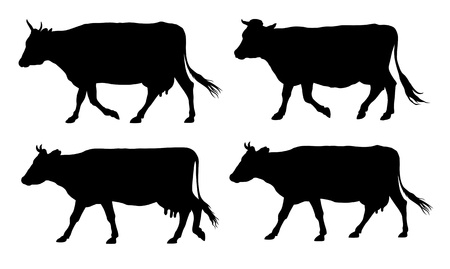 cow silhouette: illustration of wlking cows silhouettes