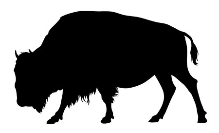 herbivorous: Vector illustration of buffalo silhouette
