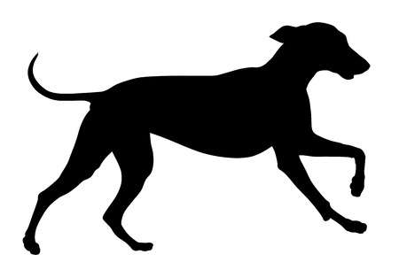 Detailed vector illustration of hunting dog silhouette