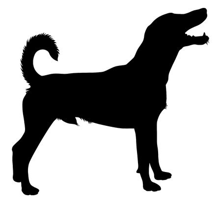 dog silhouette: Detailed vector illustration of hunting dog silhouette