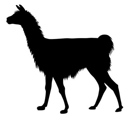 llama: Dettagliata illustrazione vettoriale di llama silhouette