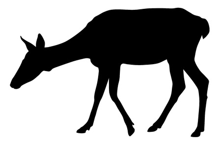 roe: Vector illustration of roe silhouette