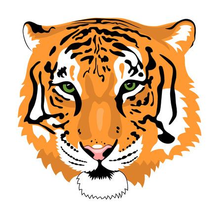 tiger head: Abstract vector illustration of tiger head