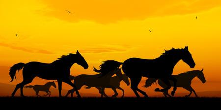 running horses: Illustration of running horses silhouettes on sunset backgroumd