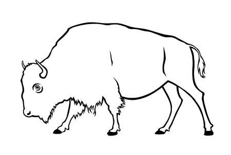 ungulate: Vector illustration of buffalo in side view Illustration