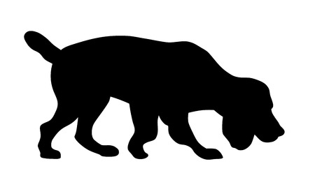 dog outline: Vector illustration of hunting dog on the trail silhouette