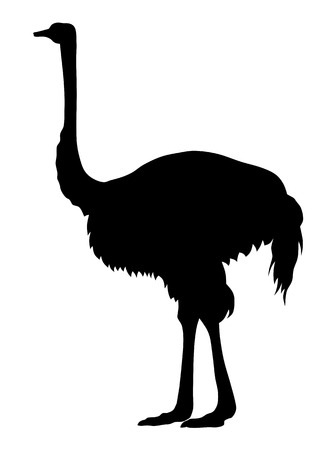 animal silhouette: Abstract vector illustration of an ostrich silhouette
