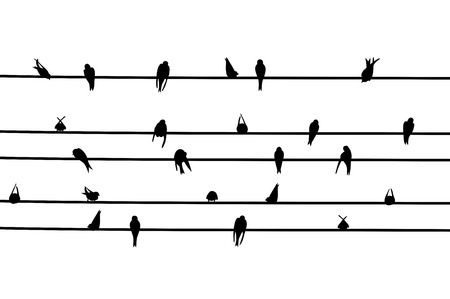 alight: Vector illustration of swallow alighted on electric wires